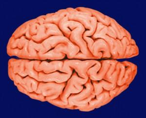 10 вещей, плохо влияющих на мозг.