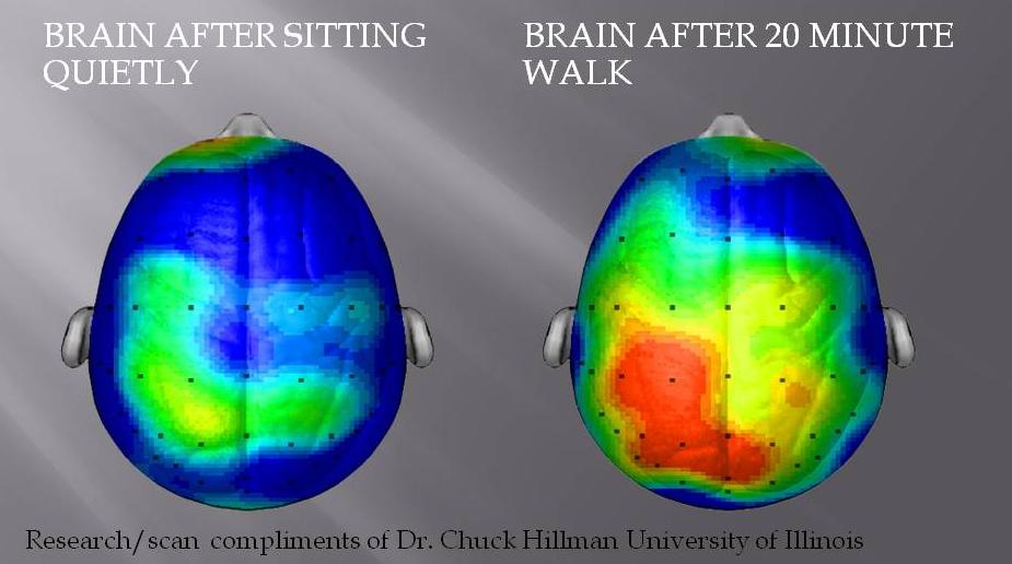 Активность мозга после 20 минутных занятий