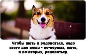 Жизнь и радость