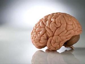 7 самых распространённых мифов о мозге